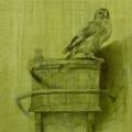 Goldfinch 1a