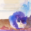 "Lexor - Watercolour on clayboard 5 x 7"""