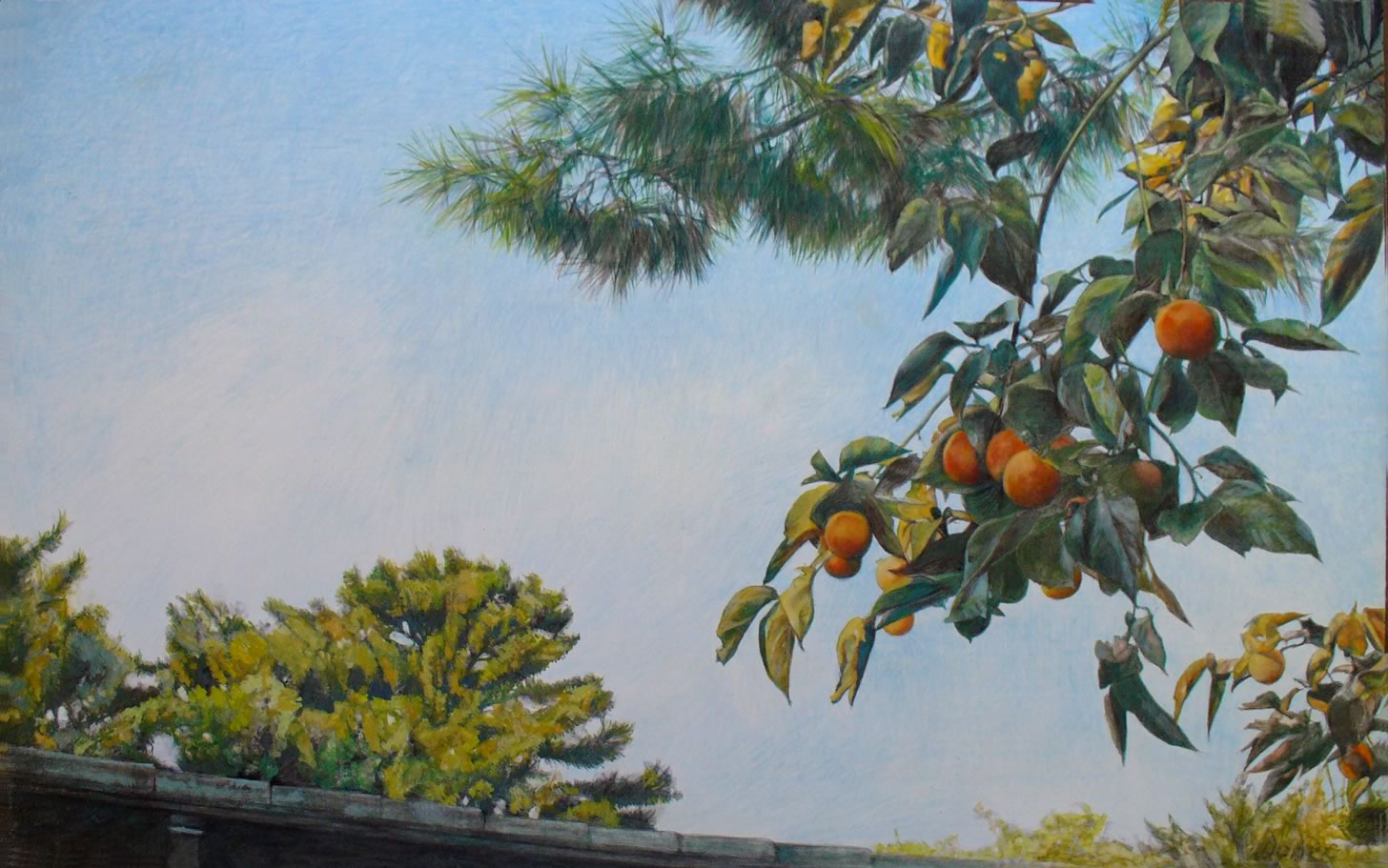 Japanese oranges in the Imperial Garden